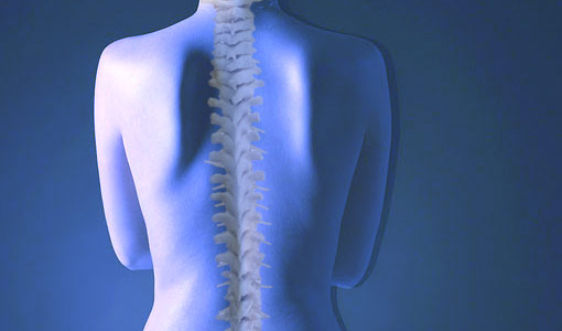 spine - chiropractic